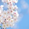 【お花見日和】春になると聞きたくなる!! 爽やかな春の曲5選