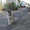野良猫の定義