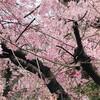 🌸🌸春分の日スペシャル🌸🌸