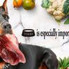 ドーベルマン(大型犬)の食事回数と摂取カロリー