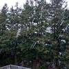 雪降ってますのん
