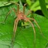 🕷栃木市 大平山で蜘蛛と昆虫を撮影!