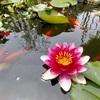 池の水をキレイにする3つ目の方法、えひめAI投入
