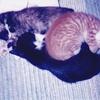 1995年 いつもくっついて寝ている赤ちゃんのくまちゃん、ちゃーちゃん、ごまちゃん