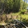 今日は、竹の伐採でした。
