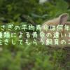 うさぎの平均寿命は何年?種類による寿命の違いと長生きしてもらうための飼育のコツ