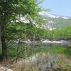 ◆5/21     新緑の鶴間池⑤…木漏れ日の中を戻る