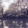 この公園、桜が綺麗なんですよーの一言で部屋を決めたときの話。