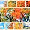秋の名残を楽しんで②植物園の紅葉編🍂🍁✨
