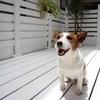 65s  犬は嬉しいと尻尾を振る。・・・・・