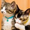 猫の日(2月22日)に遊びたい、猫テーマのボードゲーム10選