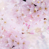 心躍る『新年度』!やっぱり春はいいですね~!!