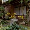 京都・八瀬 - 石蕗咲く洛北蓮華寺