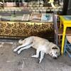 トルコで見かけた自由なお犬たちをただ貼っていく回