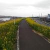 サイクリング(江戸川CR~利根川CR~緑のヘルシーロード)