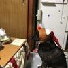 甲斐犬サンタ、一夜明けるの巻〜。∠(*・ω・)っ⌒由 プレゼント♪