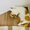 るるちゃん写真集vol.18「器用な寝方の愛猫」