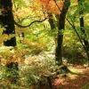 飛騨の秋景色 『大白川』 vol 2