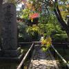 京都 紅葉 今が見ごろ 茶室と竹垣に妙があるもみじ寺 光悦寺