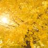 紅葉の季節だ
