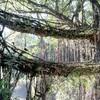 秘境!インドのノングリアット村にある「生きている木の根っこ橋」を目指して!2日目