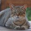 World Cat Day なのでSeattleと我が家の猫たちの写真をどうぞ
