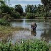 カンボジア旅行3日目:ベンメリア〜クバール・スピアン〜バンテアイ・スレイ