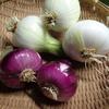 家庭菜園(6)玉ねぎ