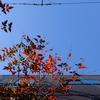 作曲工房 朝の天気 2018-01-03(水)快晴 北風 モリアキ翁 白寿