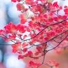 【150目実績】小5冬期講習4日目(国・算)
