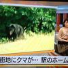 長野駅に熊出現!地元猟友会などが参加して射殺、まだあと1頭いるという情報も…
