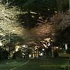 桜雨(さくらあめ) SAKURAAME