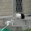 虹の橋のたもとの子どもたち5 ~子猫たちの将来設計~