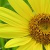 黄色が好きなあなた、気になるあなたは。