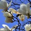 春のお彼岸