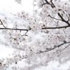吉野で桜撮影 vol.4