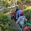 野菜畑に枯葉を運ぶ