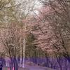 札幌史跡探訪 ― 藻南公園 ―