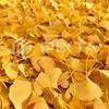 秋になると葉っぱの色が赤や黄色になるのはなぜ