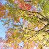 豊田の奥座敷の大井平公園の紅葉