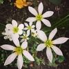 9月の緑道の花々