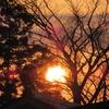◆今日も 4月下旬なみの暖かさ。