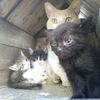 奇妙な縁と猫の魅力について