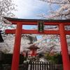 桜(No.2)