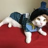 猫とひな祭り、3月3日は桃の節句、ひな祭りを愉しみましょう!