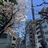 やっぱりおいしい、東京うどん人気ランキングNO. 1 「うどん 丸香」神保町