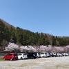 【お花見】大河津分水の桜並木~道の駅国上~猫
