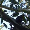 散歩中に会った鳥達: a walk and birds