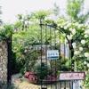 【埼玉・鶴ヶ島市】グリーンフィンガーカフェで薔薇咲くお庭とガレットを楽しむ!