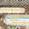 ピーマン発芽率25%... 原因の考察と固定種による次年度の強み ~べジヲタ畑Day12~